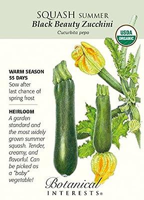 Black Beauty Summer Squash Zucchini Seeds-3g-Organic