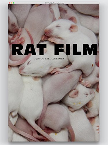 Rat Film (Best Way To Kill Rats In House)
