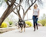 Wigzi Dual Dog Gel Leash - Walks 2 Dogs, Automatically Untangles