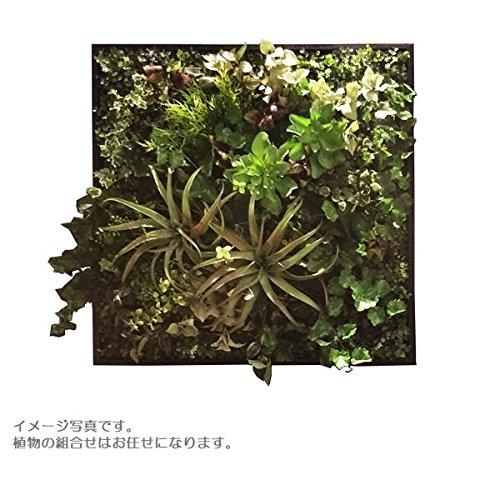 人工観葉植物 アーティフィシャルグリーンアレンジ壁面植裁 □78cm rg-015 B074FY1BVK