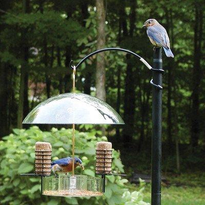 Birds Choice Supper Dome Bluebird Suet Bird Feeder, 12'' H x 12'' W x 6'' D - Birds Choice Supper Dome
