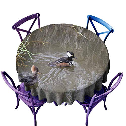 (Acelik Stain Resistant Round Tablecloth,A Male Hooded Merganser Swimming in a Stream n3,Table Cover for Home Restaurant,55 INCH)