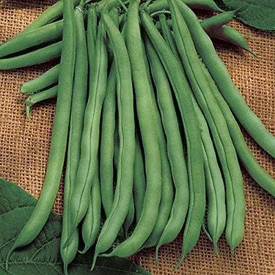 David's Garden Seeds Bean Bush Blue Lake 274 SL3085 (Green) 100 Non-GMO, Heirloom Seeds : Garden & Outdoor