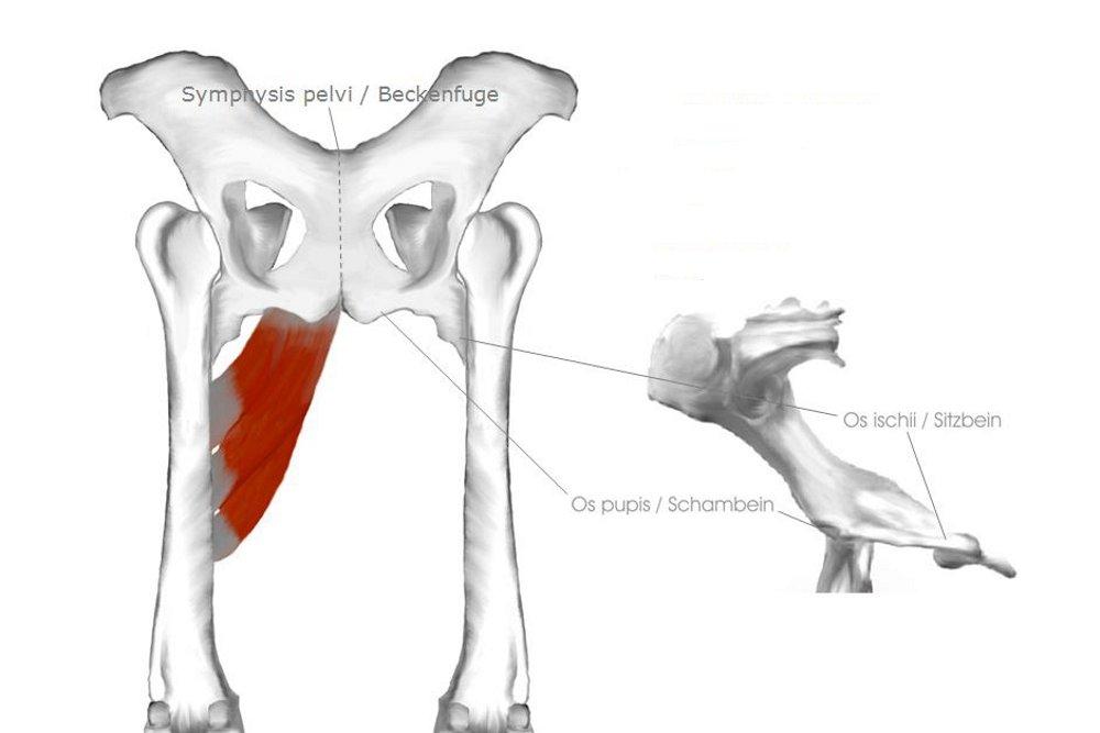 Schön Hund Gelenke Anatomie Galerie - Anatomie Ideen - finotti.info
