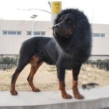 GSD Peluca de león para Perro, para Halloween, Disfraz, Fiesta, con Orejas