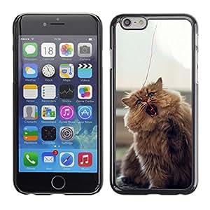 Caucho caso de Shell duro de la cubierta de accesorios de protección BY RAYDREAMMM - iPhone 6 - Gato que juega