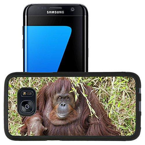 Luxlady Premium Samsung Galaxy S7 Edge Aluminum Backplate Bumper Snap Case Image Id  32011941 Orangutan Portrait While Looking At Yuo