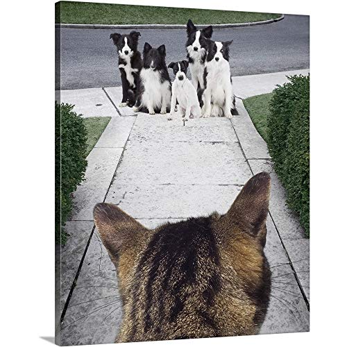 Border Russell Jack Collie (Premium Thick-Wrap Canvas Wall Art Print Entitled Cat Looking at a Jack Russell Terrier and Border Collies on The Sidewalk 20