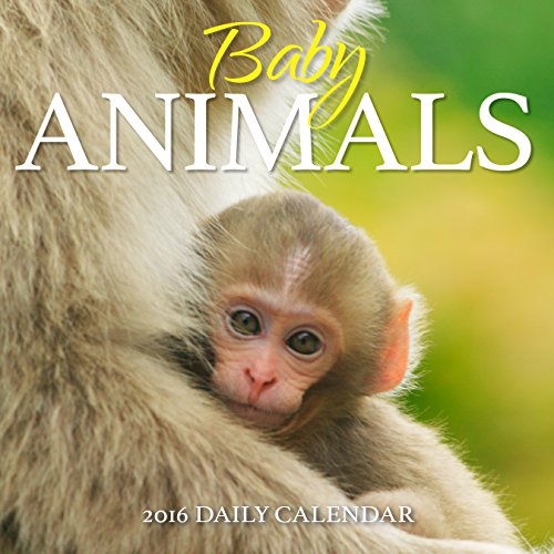 Turner Baby Animals 2016 Photo Daily Boxed (8970005)