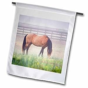 Danita Delimont - Horses - Horse grazes, Powhatan, Virginia - US47 JME0055 - John and Lisa Merrill - 12 x 18 inch Garden Flag (fl_95082_1)