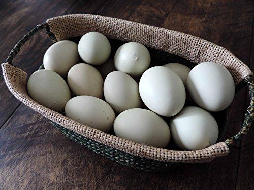 Hand Blown Free Range Chicken Easter Eggs | Green | Primitive, Natural Rustic Farmhouse, Cottage Chic Décor, Wedding Baptism Decor, One Dozen (12) Eggs