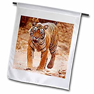 Danita Delimont - Tigers - Royal Bengal Tiger on track, Ranthambhor NP, India-AS10 JRA0387 - Jagdeep Rajput - 12 x 18 inch Garden Flag (fl_75654_1)