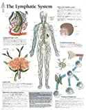 The Lymphatic System chart: Laminated Wall Chart