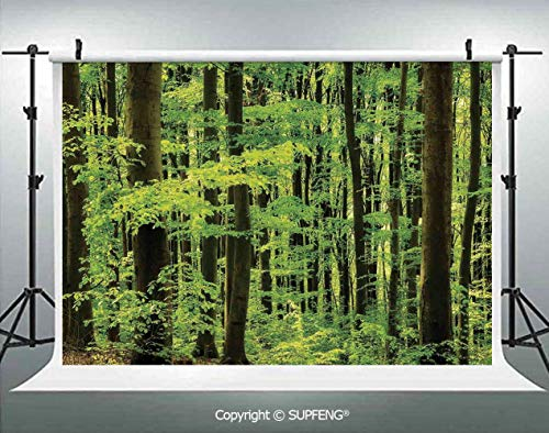 Background Spring Foliage Beech Forest Fresh Morning View in The Mountains Image 3D Backdrops for Interior Decoration Photo Studio Props