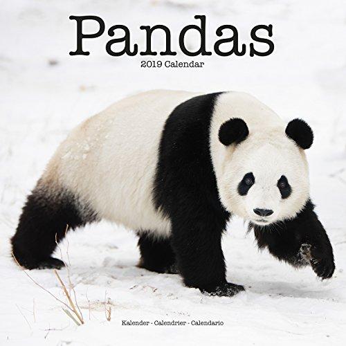 Panda Calendar - Cute Animal Calendar - Calendars 2018 - 2019 Wall Calendars - Animal Calendar - Pandas 16 Month Wall Calendar by Avonside