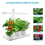 TORCHSTAR 2-Pack Plant Grow LED Light Kit, Indoor