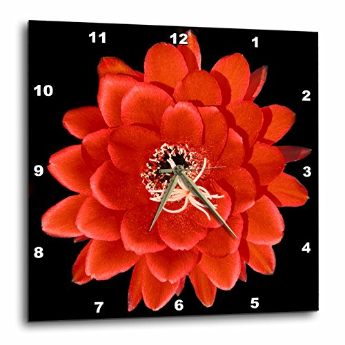 3dRose DPP_32364_3 Decorative Colorful Garden Botanic Classic Plant Sw Southwest Desert Cactus Red Black Flower Wall Clock, 15 by 15'' by 3dRose