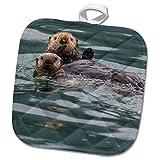 #6: 3dRose Danita Delimont - Otters - Sea otter and pup, Icy Strait, Alaska, USA - 8x8 Potholder (phl_278325_1)
