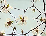 White Magnolia Flower Photography Print, Fine Art Photography, Shabby Chic Art, White and Mint Bedroom Wall Decor Picture, Baby Girl Room, Nursery Art
