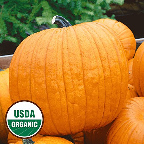 organic Howden's Field Pumpkin Pumpkin Seeds - Gold Vault Packet (Pumpkin Seed Packet)