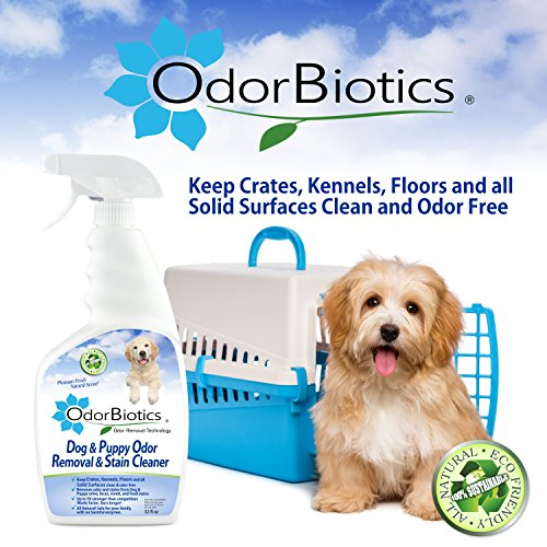 Get Dog Smell Off Rug: OdorBiotics Pet Stain & Odor Remover For Dogs & Puppies