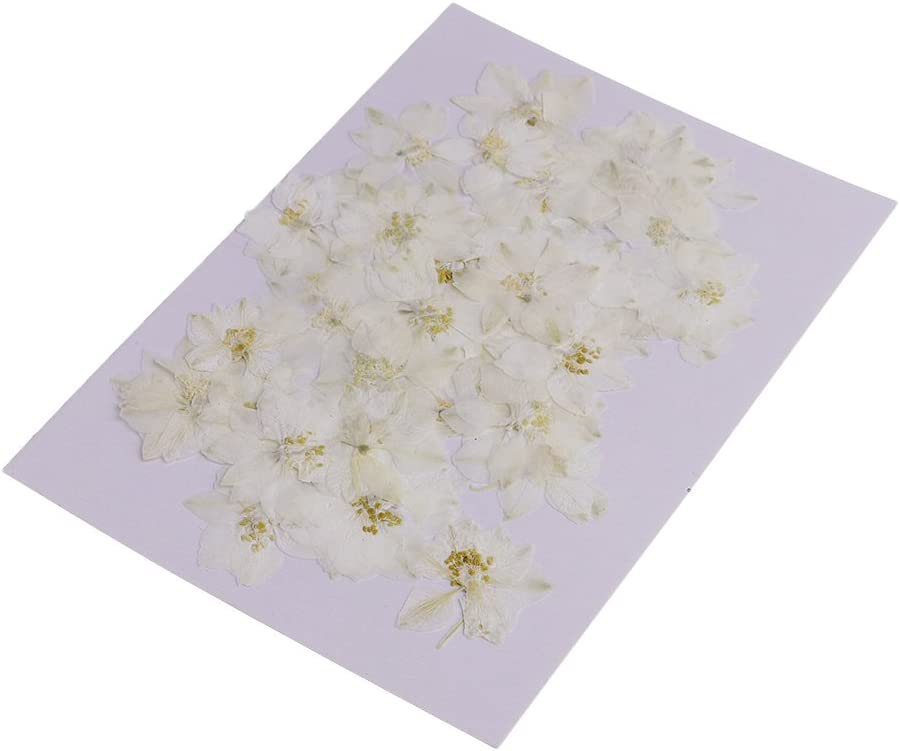 50pcs Gepresste Reale Getrocknete Blumen Für DIY Kunst Fertigkeit Karten