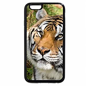iPhone 6S / iPhone 6 Case (Black) Tiger
