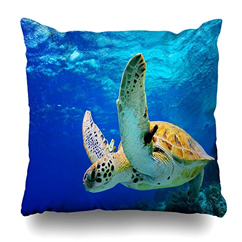 ArTmall Throw Pillow Case Fins Blue Hawaii Green Sea Turtle Swimming Caribbean Paradise in Wildlife Underwater Bonaire Life Zippered Pillowcase Square Size 20 x 20 Inches Home Decor Cushion Covers (Best Snorkeling In Bonaire)