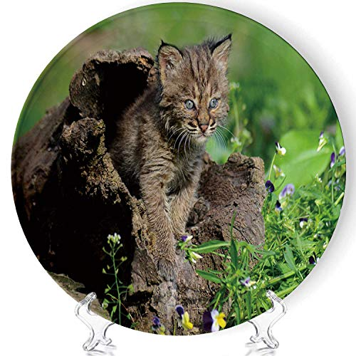 C COABALLA Baby Bobcat Playing in a Hollow Log Fashion Decorative Plates Display Plate Crafts a63020for Living Room of The Home,8