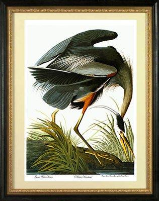 Audubon Bird Series (