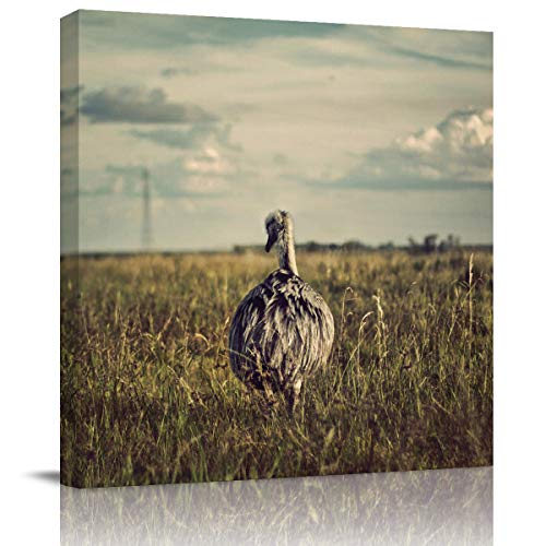 (Libaoge Large Canvas Home Art Print for Wall - Back View of Ostrich On The Prairie Artwork Gallery Wrapped Poster Decoration for Kitchen Office Walls - Framed, 24X24In)