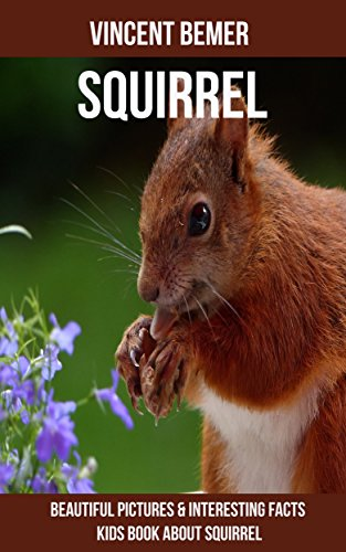Squirrel: Beautiful Pictures & Interesting Facts Kids Book About Squirrel