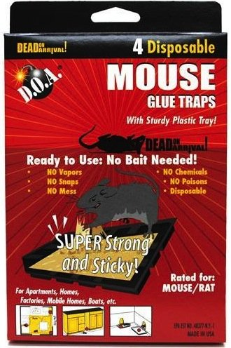 glue mouse trays ea