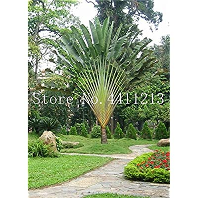10 Pcs/Bag Bottle Palm Tree Bonsai Exotic Bonsai Tree Tropical Ornamental Plant Bonsai for Home Garden Four Seasons Decoration - (Color: 10): Garden & Outdoor