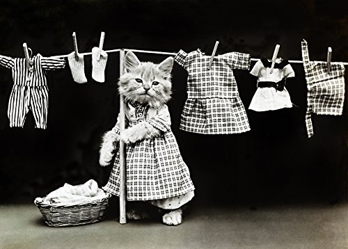 (Posterazzi Poster Print Collection Kittens N'Hanging up the Wash.' Photograph by Harry Whittier Frees C1914, (18 x 24), Multicolored)