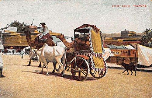 Street Scene Antique (Tajpore India Street Scene Camel Carriages Natives Antique Postcard K10056)