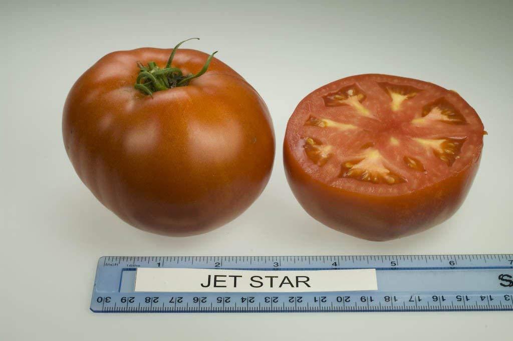 CUSHY 25 semillas: tomate Semillas de Jet Star- Estos ...