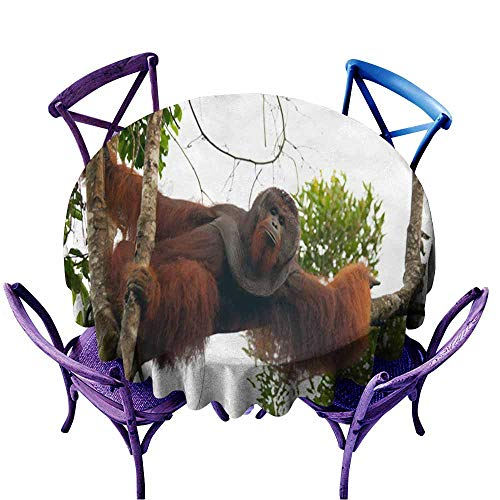 Acelik Round Solid Polyester Tablecloth,Big Male Orangutan on a Tree in The Wild 2,Party Decorations Table Cover Cloth,35 INCH