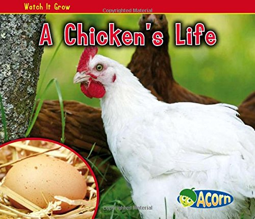 A Chicken's Life (Watch It Grow)