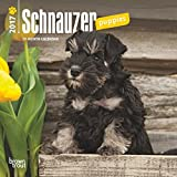 2017 Schnauzer Puppies Mini 7x7 Wall Calendar Dogs Puppy pups {jg} Great Holiday Gift Ideas - Great for mom, dad, sister, brother, grandparents, gay, lgbtq, grandchildren, grandma.