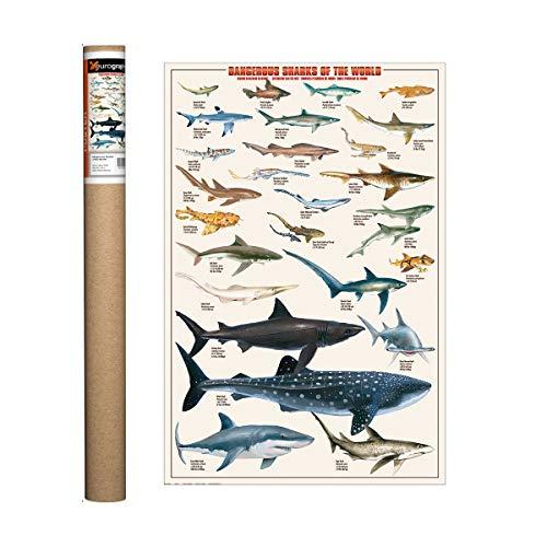 (EuroGraphics Dangerous Sharks Poster, 36 x 24 inch)