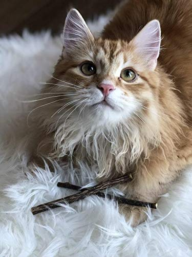 Meowy Janes Matatabi Chew Sticks - An All Natural Silvervine Cat Toy and Cat Treat - Catnip Alternative 9