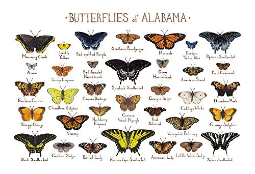 Alabama Butterflies Field Guide Art ()