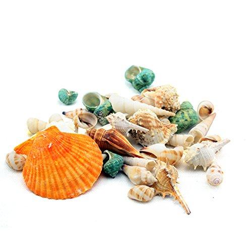 Gosear 200g Kit de Mar Cáscara Playa Conchas Concha Caracol para Acuario Natural de Tanque de Pescados / Accesorios de...