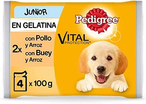 Pedigree Comida húmeda para Perros Junior, Sabor Pollo y Buey con Arroz en Gelatina, Multipack (13 Packs x 4 bolsitas x 100g)