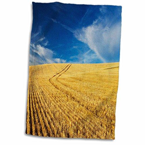 3dRose Danita Delimont - Farms - Farm Fields, Harvest Wheat, Palouse, Washington, USA - US48 TEG0425 - Terry Eggers - 12x18 Hand Towel (twl_148727_1)