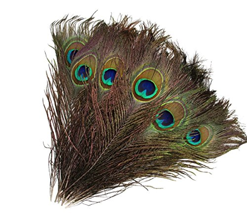Where Can I Buy Peacock Feathers Craft Store