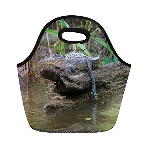 - Semtomn Lunch Bags Tour Green Louisiana Honey Island Swamp American Alligator Bayou Neoprene Lunch Bag Lunchbox Tote Bag Portable Picnic Bag Cooler Bag