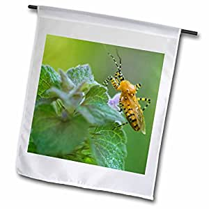 Danita Delimont - Insects - True Bug insect, Log Cabin Trail, Arkansas - US04 RKL0034 - Raymond Klass - 18 x 27 inch Garden Flag (fl_88121_2)
