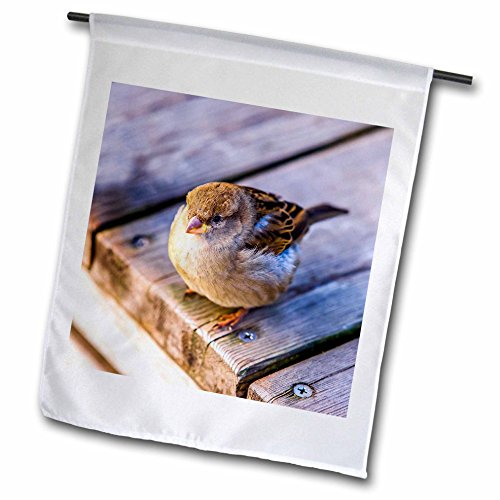 3dRose Alexis Photography - Birds - Fat sparrow on a wooden deck. Hard to fly after good lunch - 18 x 27 inch Garden Flag (fl_270245_2) (Sparrow Lunch)